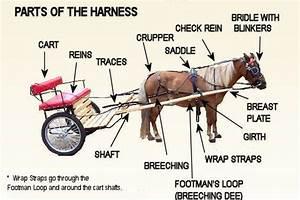 Harness Parts Diagram