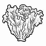 Lettuce Coloring Clipart Clip Colorir Laitue Coloriage Lattuga Alface Malbuch Lechuga Libro Colorare Children Worksheet Colorear Kopfsalat Livre Livro Kleurend sketch template