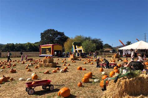 the godmothers of timothy murphy school pumpkin field st 369 | godmothers2 1
