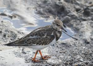 Large Water Bird Identification