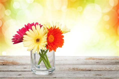 flower secret gerbera flower meaning flower meaning