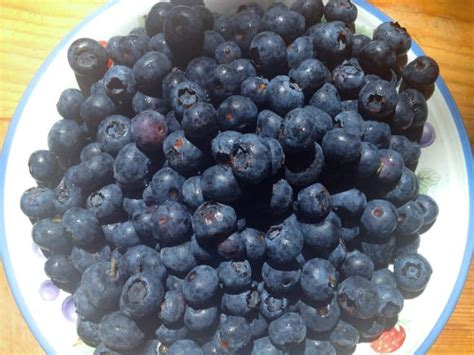 what color are blueberries color palette blueberries kate pitner designs