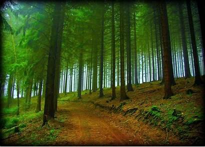 Forest Fog Desktop Trees Nature Background Road