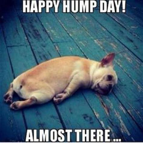 hump day work meme happy hump day   picsmine