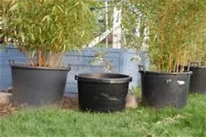 Gros Pot Pour Olivier : olivier en pot taille r serve d 39 eau astuce au jardin forum de jardinage ~ Melissatoandfro.com Idées de Décoration