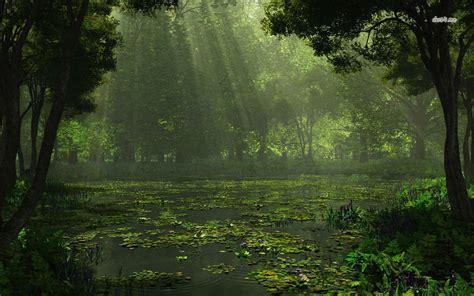 swamp background wallpapersafari