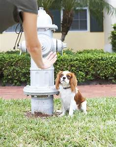 dog potty training and regression cuteness With train dog to potty outside