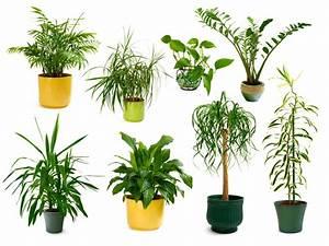 Luftreinigende Pflanzen GoodBetterHealthy