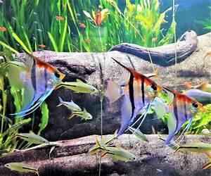 Fische Aquarium Hamburg : rochen und haie hautnah erleben im tropen aquarium ~ Lizthompson.info Haus und Dekorationen