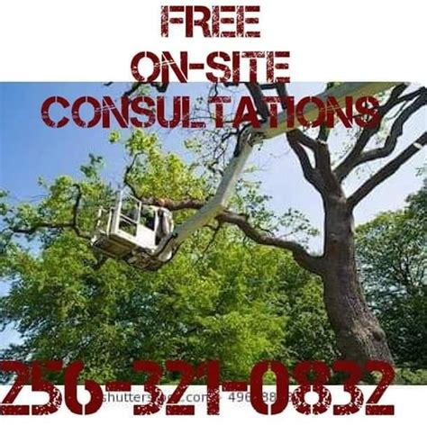 mike nichols tree service mike s tree trimming removal of athens madison
