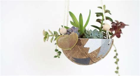 plante noix de coco en pot 14 des plantes suspendues