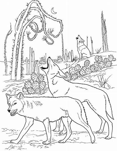 Wolf Coloring Pages Wolves Pack Animals Printable