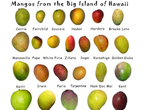 Mangoes Wallpapers For You