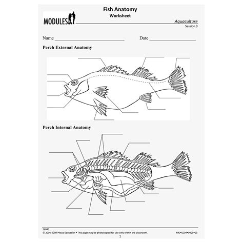 fish anatomy worksheet w26941
