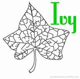 Coloring Ivy Pages Leaf Designlooter Wonderweirded Wildlife 58kb 346px Identification sketch template