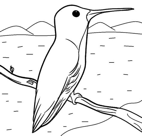hummingbird coloring pages coloringpages