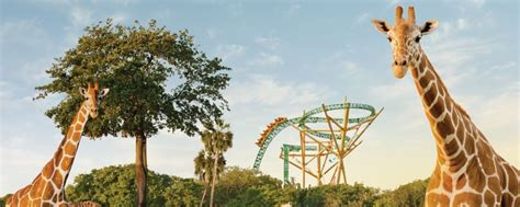 Bush Garden Ticket Price by Busch Gardens Ta Tickets At Discount And Cheap Prices