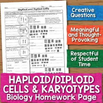 haploid diploid cells karyotypes biology homework