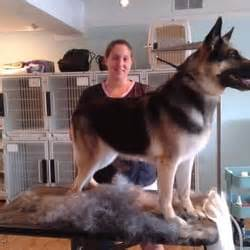 Perfect paws pet grooming pet groomers 550 kingstown for Dog groomers wakefield ri
