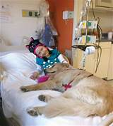 Service Dogs In Hospitals