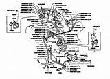 Toyota Prado Wiring Diagram Español