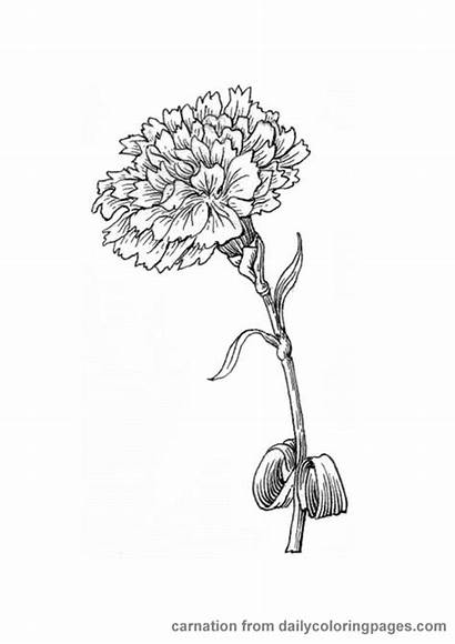 Flower Coloring Pages Tattoo Realistic Carnation Birth