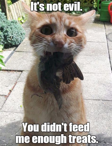 Cute Cat Meme Generator - cute cat meme generator 28 images cute cat blank template imgflip grumpy cat part 2 best