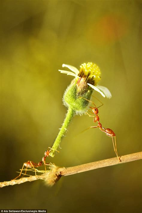 ant appears   giving  friend  flower   gift
