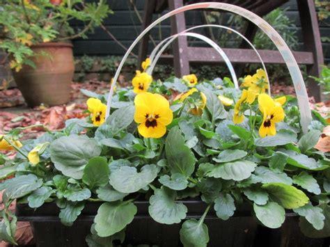 winterviooltjes en bloembollen planten  je bloembakken
