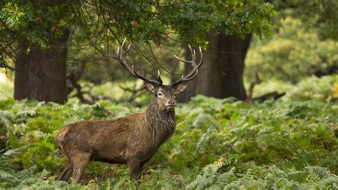 Landscape, Wildlife, Elk, Fauna, Mammal