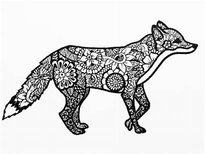 Pages Zentangle Animal Animals Coloring Easy Fox