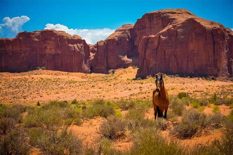 Nature Sandstone Horse Desert Landscape Wallpapers Hd
