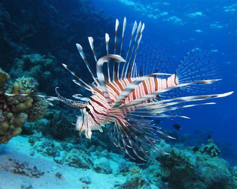 lionfish  door zoo
