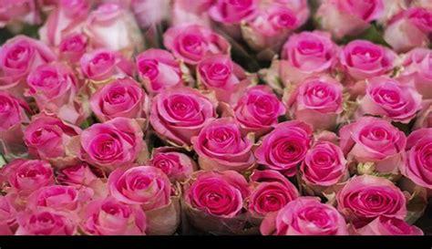 flores para mam 225 un regalo caro para este 10 de mayo