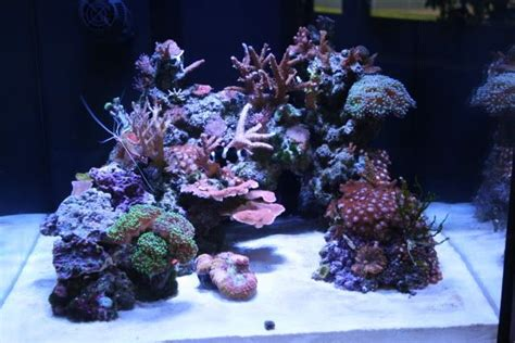 Saltwater Aquarium Aquascape by Show Me Your Cube Aquascaping Pictures Reef Central