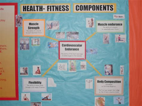 components  physical education bulletin board google
