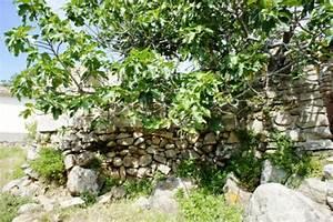 Feigenbaum Im Garten : la tua casa sul mare case vacanza casa del pittore ~ Orissabook.com Haus und Dekorationen