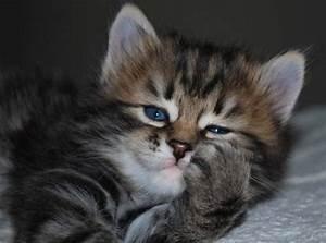 What type of cats are hypoallergenic? - Quora