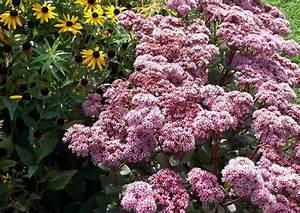 Blühende Pflanzen Winterhart : winterharte stauden als topf und k belpflanzen ~ Michelbontemps.com Haus und Dekorationen