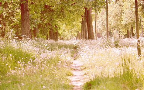 Im Frühjahr by Woods Im Fr 252 Hjahr Hintergrundbilder Woods Im Fr 252 Hjahr