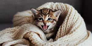 25 Best Cat Quotes That Perfectly Describe Your Kitten ...