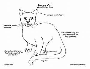 Arctic Cat Diagrams