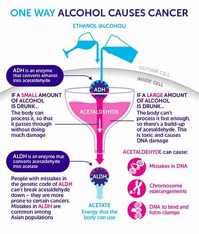 Alcohol Cancer Research Cause Acetaldehyde Does Causes