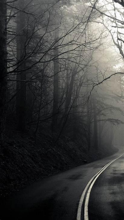 Iphone Dark Forest Mobile Wallpapers Desktop Mist