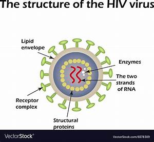 The Structure Of The Aids Virus Hiv Royalty Free Vector