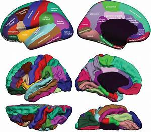 Regions In The Dkt Cortical Labeling Protocol  Cortical