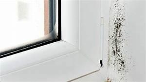 Schimmel Von Wand Entfernen : schimmel an der wand und auf m beln entfernen so geht schimmel wand schimmel im bad ~ A.2002-acura-tl-radio.info Haus und Dekorationen