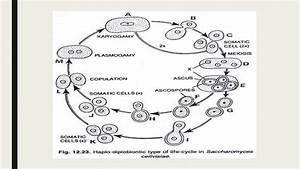 Kegunaan diagram kotak garis image collections how to yeast cell structure diagram image collections how to guide and refrence ccuart Image collections