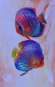 1000+ images about discus fish on Pinterest   Cichlids ...