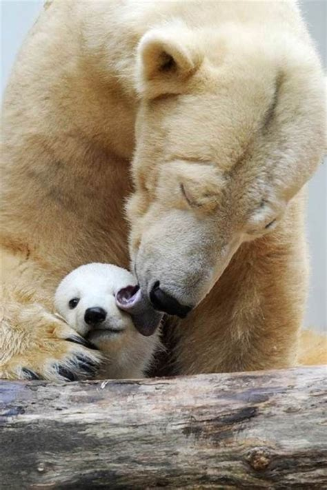 pictures  funny  cool animals